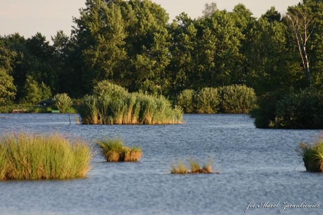 Jezioro w Januszkowicach.jpeg